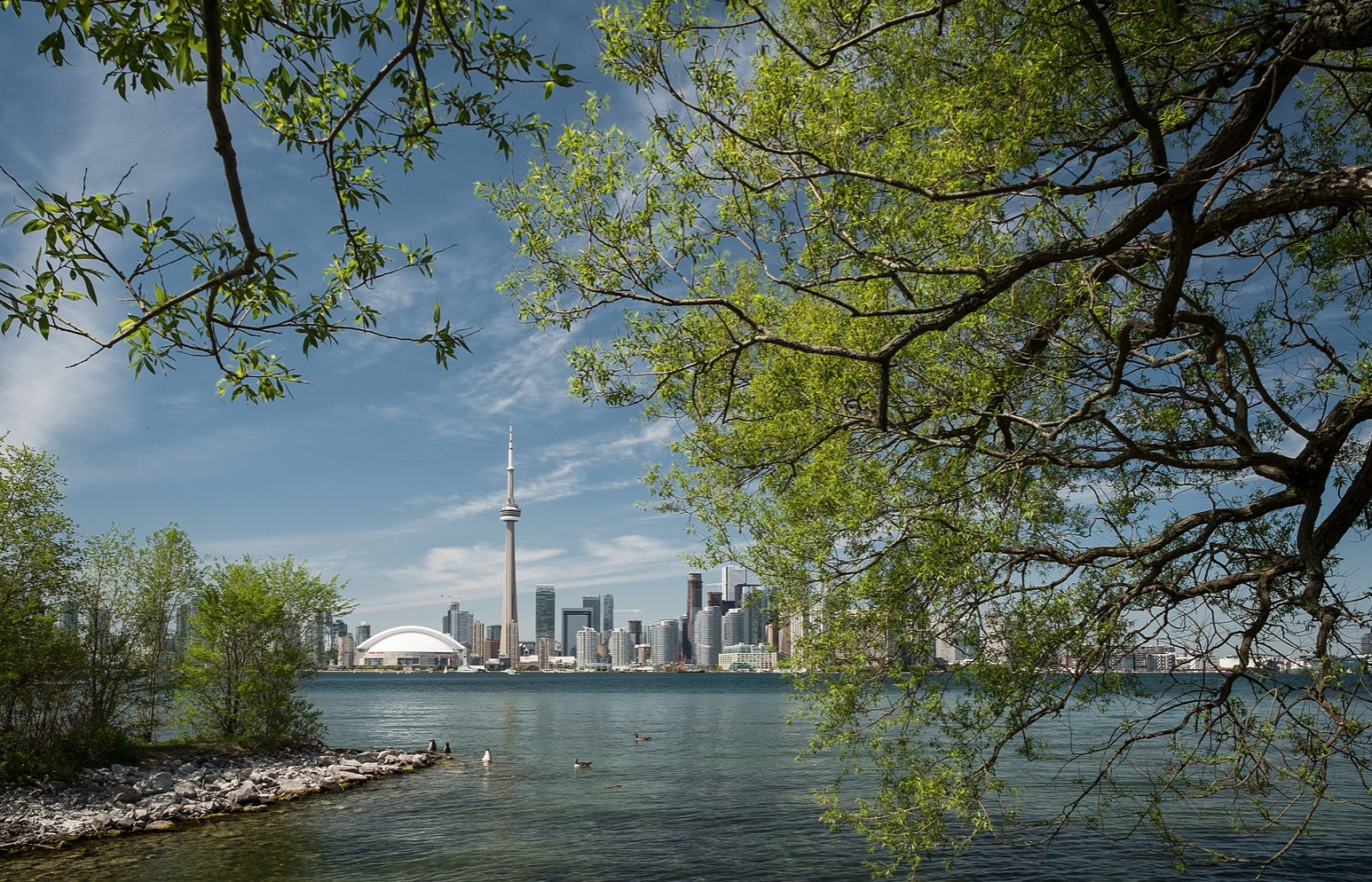 Seculed island in toronto